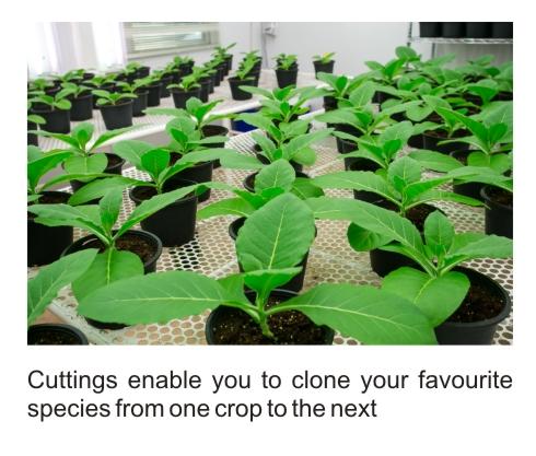 plant cuttings cloning