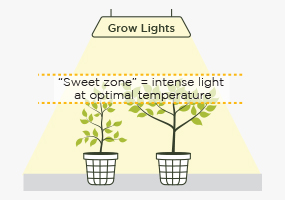 Grow Lights Position & Size
