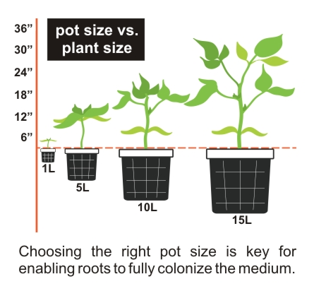 Choosing the right pot size for transplanting