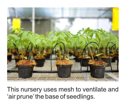 air pruning of cuttings
