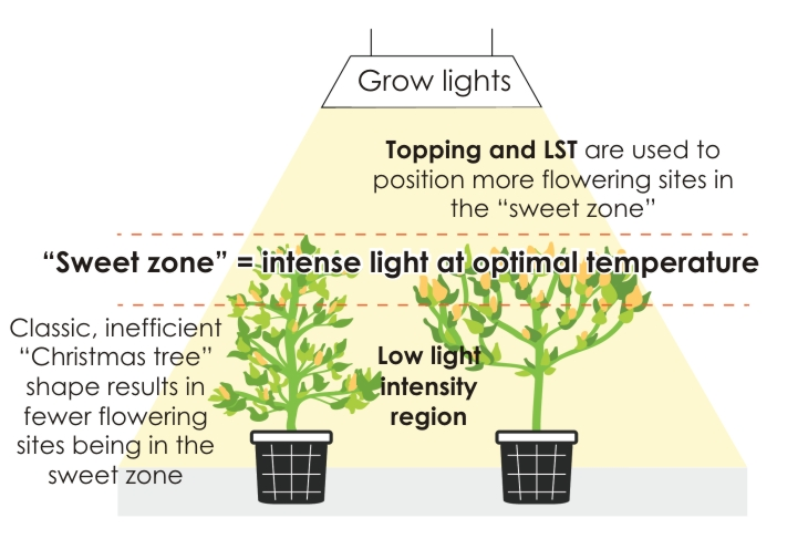 Topping & LST | FloraMax